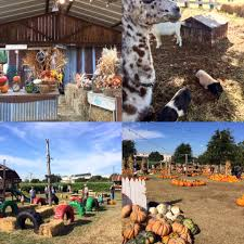 Pumpkin Farms In North Georgia by Hall U0027s Pumpkin Farm Home Facebook