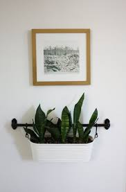 Good Plants For Windowless Bathroom by Bathroom Good Plantsr Bathroom Images Inspirations Windowless