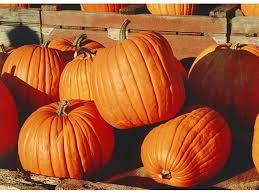 Nearest Pumpkin Patch Shop by Here U0027s A Roundup Of The Best Cedar Park Pumpkin Patches Cedar