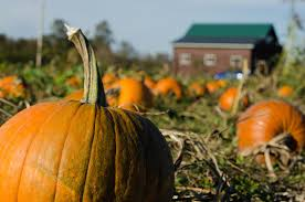 Pumpkin Patch Sf by 22 Quintessentially Fall Things To Do In The Bay Area