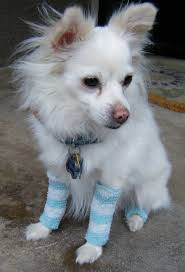 sew upcycled doggy leg warmers