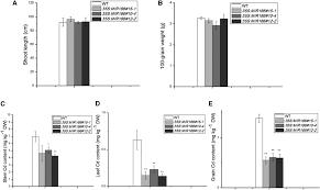 100 Itai Itai Itai 4 MicroRNA166 Modulates Cadmium Tolerance And Accumulation In
