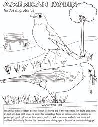 American Robin Coloring Page Pdf