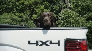 4K Dog In The Back Of A Truck Stock Video Footage - VideoBlocks Best Dog Crate For Pickup Truck Beds Soft Plastic Alinum Bearded Dogs Food Truck Is Now Sling Gourmet Dogs At A Brewery Dog 2 Album On Imgur And Richmond Sand Gravel Landscaping Large Seen In The Back Of A Waiting Its Owner Stock Bernese Mountain Puppies In Doggies Swiss Takes Semi On Joyride Crashes Into Tree And Parked Car Treat East Greenbush Albany Ny Mugzys Barkery Cowgirl Driving Old Stocksy United Pbs 4 Axle Delivery Muscat Arizona Patrol Volunteer Saves Tied To Heading 3 Trailer
