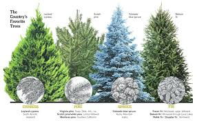 Best Real Christmas Trees And Where To Find Them Excellent Species Of Trendy