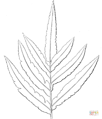 Click The Ferns Coloring Pages