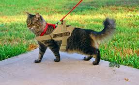 service cats government approves ptsd cats vet tv