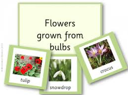 flowers that grow from bulbs names flower shop near me