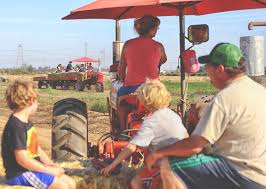 Best Pumpkin Patch Near Roseville Ca by Roemer Pumpkin Patch In Sacramento With Corn Maze U0026 Hay Rides
