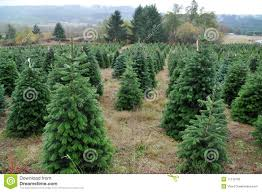 Christmas Tree Farm Business Plan - Rainforest Islands Ferry Fding The Perfect Christmas Tree News The Repository Christmas Farms In Ohio Rainforest Islands Ferry Weekend Getaway Guide Wooster And Wayne County Ohio Girl Twinsberry Tree Farm Victorian Bouquets Events Farm Legs Butt Core Stay Fit 24 20 Jun 2017 Looking For A Life Culture Amish Country Lodging Bed Breakfast House Cabins Barn Lights Decoration