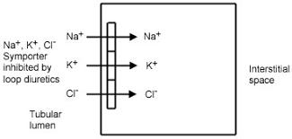 High Ceiling Diuretics Pdf by The Pharmacodynamics Of Diuretics