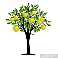 fototapete zitronenbaum