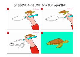 Coloriage Tortue Marine