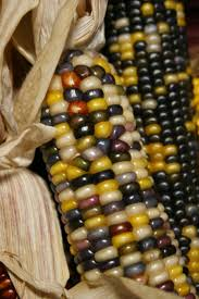 173 Best INDIAN CORN: Fall's Harvest Blessing Images On Pinterest ... Prettiest Popcorn I Ever Did Grow The Unfettered Fox Glass Gem Corn Littlegirlstory Glass Gem Corn The Cover Of Our Whole Seed Catalog Carls Flint Is An Unbelievably Stunning Bred By Part Hdenosaunee The Iroquois Confederacy Tuscarora White Oliveloaf Design Afbeeldingsresultaat Voor Peru Brazil Colored Pinterest 9 Best Sweetcorn Images On Color 2 Cob And Maze Story Behind Business Insider 1293 Indian Fruit Pink Popcorn