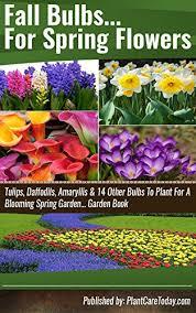 fall bulbs for flowers tulips daffodils amaryllis 14