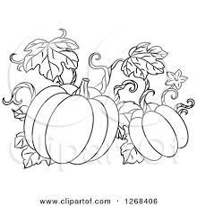 pumpkin vine clip art black and white
