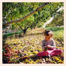 Pumpkin Patch Pittsburgh 2015 by 2014 Fall Activities In Pittsburgh Family Guide The Pittsburgh