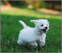 Small Non Shedding Dogs For Adoption by Hypoallergenic Dogs In Nj Breed Dogs Picture