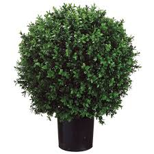 Sun Fung 36 Inch Topiary Tree English Ivy In Pot 36 Tall Easy For