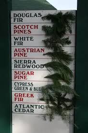 Santa Cruz Christmas Tree Farms crest ranch christmas tree farm santa cruz california bay area