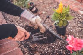 How To Start & Create The Ultimate Urban Garden | Flower Glossary Mail Order Natives Mailordernatives Instagram Account Pikstagram Tax Day 2019 All The Deals And Freebies To Cashin On April 15 Arbor Foundation Coupons Code Promo Discount Free National Forest Tree Care Planting Gift Mens Tshirt Ather Gray Coffee Whosale Usa Coupon Codes Online Amazoncom Vic Miogna Brina Palencia Matthew How Start Create Ultimate Urban Garden Flower Glossary Off Coupons Promo Discount Codes Wethriftcom 20 Koyah Godmother Gift Personalized For Godparent From Godchild Baptism Keepsake Tree Alibris Voucher Code Dna Testing Ancestry Suzi Author At Gurl Gone Green Page 13 Of 83