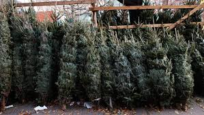 Christmas Trees Given Away For Free After Ohio Donor Buys The Lot School Says