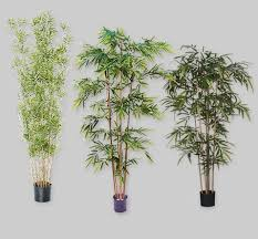 bambus kaufen bei hornbach schweiz