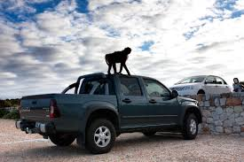 Brett Cole Photography | A Juvenile Baboon Stands Atop A Truck In ... 2019 Freightliner Business Class M2 106 Los Angeles Metro Ca Raneys Truck Center Your Ocala South Bay Bmw Sales Service And Fancing In Torrance Who Is Velocity Carson Dealership New Trucks Loading Dock Wikipedia Beach Cities Driving School Reliance Chevrolet Buick Gmc City Used Car Municipality Services Elizabeth Hk Wyoming Brett Cole Photography A Juvenile Baboon Stands Atop A Truck