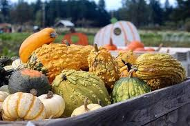 Pumpkin Patch College Station 2017 by Bargain Bellingham Affordable Fall Fun In Whatcom County Whatcomtalk
