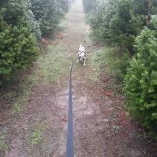 Santa Cruz Christmas Tree Farms by Js Tabacco Ranch 10 Photos U0026 16 Reviews Christmas Trees