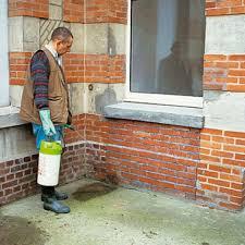 anti mousse murs exterieurs entretien d une terrasse salissures mousses éclatements des