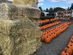 Nj Pumpkin Picking by Visit Nj Farms Depiero U0027s Farm Stand U0026 Greenhouses