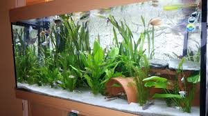 Star Wars Fish Tank Decorations by Is My Tap Water A Lost Cause Uk Aquatic Plant Society