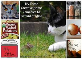 Natural Home Reme s To Get Rid Mice