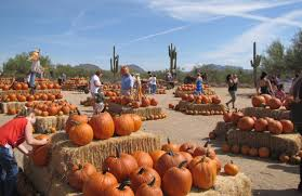 Tucson Pumpkin Patch by Macdonald U0027s Ranch Pumpkin Patch Why Families Love It