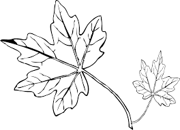 9 How To Draw A Leaf Free Printable Coloring Pages 2