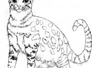 Looking For Coloring Pages Children