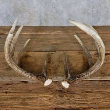 Whitetail Deer Antler Set For Sale #14962 - The Taxidermy Store Want To Decorate Your Car Or Truck For The Holidays Weve Got Some Red Co Reindeer Antlers Christmas Kit Extra Large The Worlds Best Photos Of Moose And Truck Flickr Hive Mind High Wide Heavy Outfitters North Texas Bowhunts Atoka Ok Official Website Roman Monster Holiday Table Piece 131246 Lumiparty Suv Van 155196 Accsories At Sportsmans Guide Utah Antler Buyers Antlbuyerscom With Pile Animal Antlers In Usa Vironmental Issues Stock