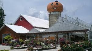 Pumpkin Farm Illinois Giraffe by Photos At Goebbert U0027s Farm U0026 Garden Center South Barrington Il
