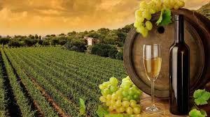 Images In Landscape Villa Red Wine Tuscany Vineyard Wallpaper S Uskycom
