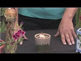 flower bulbs how to plant bulbs in water