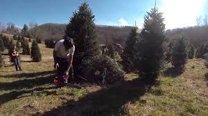 Brown Christmas Tree Farm Boone Nc by 2012 Christmas Tree U0027what Fir U0027 Tree Farm Gopro Hero 3 Youtube