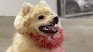 Halloween Scare Pranks Compilation by Prank2prank Cute Killer Doge Scare Prank