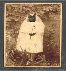 cat wedding dress cat wedding dress with veil by by fiercepetfashion on etsy 65 60