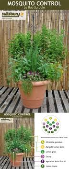 Best 25+ Mosquitoes Ideas On Pinterest | Garden Bug Spray ... 15 Backyard Tiki Torches Torches Citronella Oil And How To Get Rid Of Mosquitoes Mosquito Magnet The Best Ways To Of Naturally Beat The Bite Backyard Mosquitoes Research 6 Plants Keep Bugs Away Living Spaces Creepy 10 Herbs That Repel Bug Zapper Plant Lemongrass As A Natural Way Keep Away Pure 29 Best Images On Pinterest Weird Yet Effective Pest Hacks Thermacell Repellent Patio Lanternmr9w Home Depot 7 Easy Mquitos Dc Squad