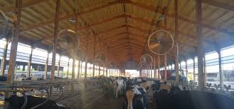 Freestall/Calving Barn - Ymker Insulation Around The Farm Scissors Creek Cattle Company The Beutler Family Bench Design Hay Barn Plans Shed Heifer Development Way View Onduty Horse Csavvycom We Know Working Horses Katefairlie Kate Fairlie Kims County Line Cribs Aka Sheds Enduragate Setup Demstration For Calving Youtube Portable Calving Beef Facilities Pinterest Barn 332014 Calving2014 January 2014 Life On A Bc Ranch Slate Architecture Boots Heels Renovated Area