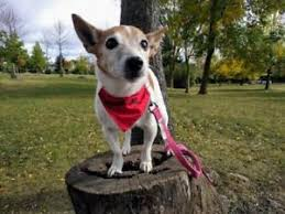 Dogs That Shed Very Little by Adopt Local Dogs U0026 Puppies In Guelph Pets Kijiji Classifieds