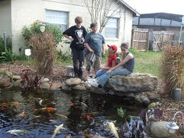 Kids Backyard Koi Pond Orlando|Florida|Water Garden Experts Backyard With Koi Pond And Stones Beautiful As Water Small Kits Garden Pond And Aeration Diy Ponds Waterfall Kit Lawrahetcom Filters Systems With Self Cleaning Gardens Are A Growing Trend Koi Ponds Design On Pinterest Landscape Prefab Fish Some Inspiring Ideas Yo2mocom Home Top Tips For Perfect In Rockville Images About Latest Back Yard Timedlivecom For Sale House Exterior And Interior Diy