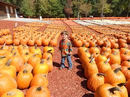 Pumpkin Patch Parable Craft by The Pumpkin Patch Parable Shepherd My Child