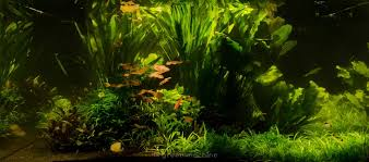 Nature's Chaos Transformed Into A Jungle Style Aquacape! - The ... Aquascaping Nature Aquariums Of Zoobotanica 2013 Youtube Aquascape The Month November 2009 Riverbank Aquascaping Style Part 5 Roots By Papanikolas Nikos Awards Aquascapes Lab Tutorial River Bottom Natural Aquarium Plants The Planted Tank 40 Gallon Aquarium Everything About Incredible Undwater Art Cube Tanks Aquariums Dutch Vs How To A Low Tech Part 1